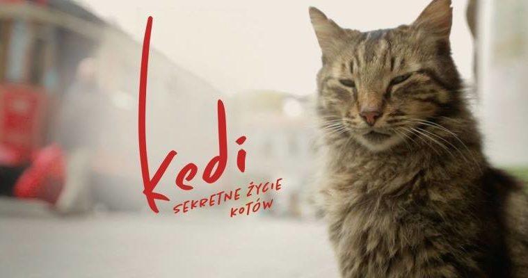 Kiedi2